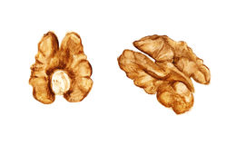 Two halves of walnut Stock Photos
