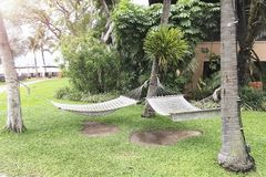 Two hammocks suspended on three trees. Two hammocks suspended on three trees usually seen as a symbol of summer and relaxation royalty free stock images