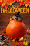 Two hamsters in witch hats for halloween Stock Photo