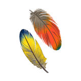 Two hand drawn smoth orange and yellow tropical, exotic feathers Royalty Free Stock Photo