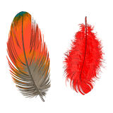 Two hand drawn smoth orange and yellow tropical, exotic feathers Stock Image