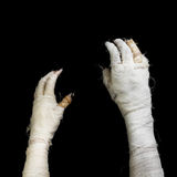 Two hand of mummy Stock Photos