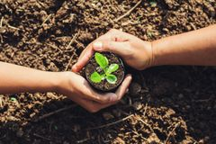 Two hand planting tree. In garden royalty free stock image