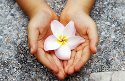 Two hand protect flower Royalty Free Stock Photos