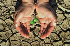 Two hand protection young plant growing in soil arid concept. Eco Stock Image