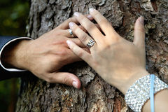 Two hands. Two hand on big tree Royalty Free Stock Photography
