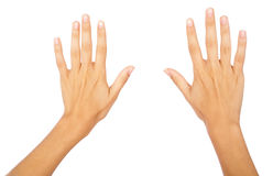 Two hands royalty free stock photo