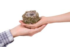 Two hands with bird's nest. On white stock image