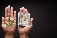 Two hands with cannabis and money. The concept of selling marijuana, hemp, drugs stock photography