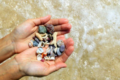 Two hands with a different seashells and stones on the sea beach background in the sunny summer weather. stock photography