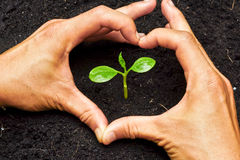 Two hands forming a heart shape around a tree. Two hands forming a heart shape around a young plant / growing tree / save the world stock images