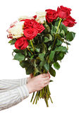 Two hands giving bunch of various roses isolated Royalty Free Stock Photo