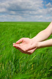 Two hands at gren field background Stock Photos