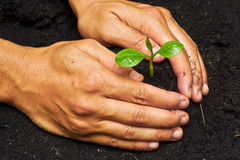 Two hands growing a tree. / save the world royalty free stock image