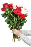 Two hands hold bouquet of many roses isolated Royalty Free Stock Image