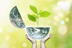 Two hands hold planet earth opening fresh green growth tree. Two hands hold planet earth opening fresh green growth small tree with beautiful freshness outdoor royalty free stock photos