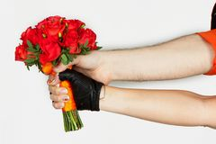 Two hands holding bouquet of red roses isolated on white background stock photo