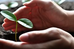 Hands holding and caring a green young plant. Two hands holding and caring a green young plant Royalty Free Stock Images