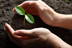 Hands holding and caring a green young plant. Two hands holding and caring a green young plant Stock Photography