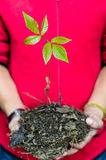 Two hands holding a green young plant Royalty Free Stock Photos