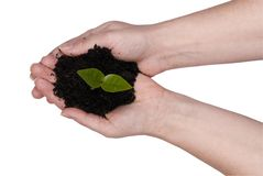 Two hands holding a plant Stock Image