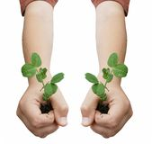 Two hands holding plants Stock Images