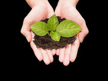 Two hands holding small tree Royalty Free Stock Photo