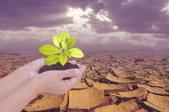 Two hands holding small tree over dry earth with cracked texture Stock Photo