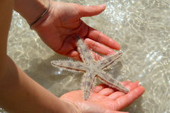 Holding a starfish Stock Photography