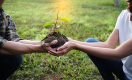 Two hands holding together young of a tree royalty free stock images