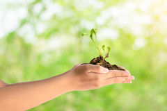 Two hands holding young plant. Closeup of two hands holding young plant on a beautiful color background Royalty Free Stock Photo
