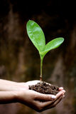 Two hands holding a young plant Stock Image