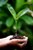 Two hands holding a young plant Stock Images