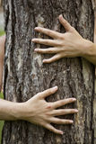 Hugging tree Stock Images