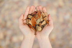 Two hands human hold leaves dry life Concept Royalty Free Stock Photos