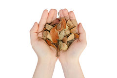 Two hands human hold leaves dry life Concept Royalty Free Stock Image