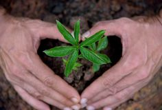 Nature plants in hand sign heart, Earth concepts. royalty free stock images