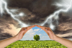 Two hands preserve a green tree against a thunder royalty free stock photos