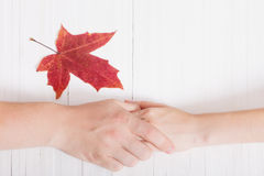 Two hands and leaf on white wooden background royalty free stock photos