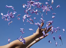 Two hands throwing Jacaranda flowers. Into the blue sky Stock Image