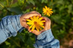 Two hands with yellow flowers stock photo