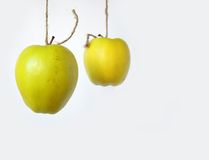 Two hanging apples Stock Photo