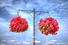 Two hanging baskets of bergonias with blue sky and white clouds Stock Image