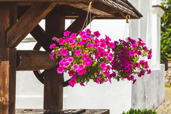 Two hanging pot with blooming Petunia Stock Photos