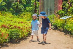 Two happy brothers running together on a park path in a tropical park Royalty Free Stock Photos