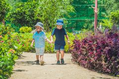 Two happy brothers running together on a park path in a tropical park Stock Photo