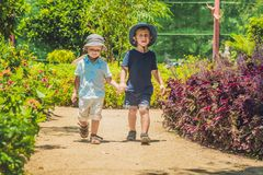 Two happy brothers running together on a park path in a tropical park Stock Photos