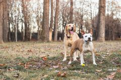 Two happy dog friends stock photos