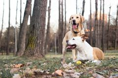Two happy dog friends stock images