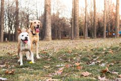 Two happy dog friends royalty free stock photography
